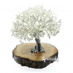 Olivo de Plata 25 cm